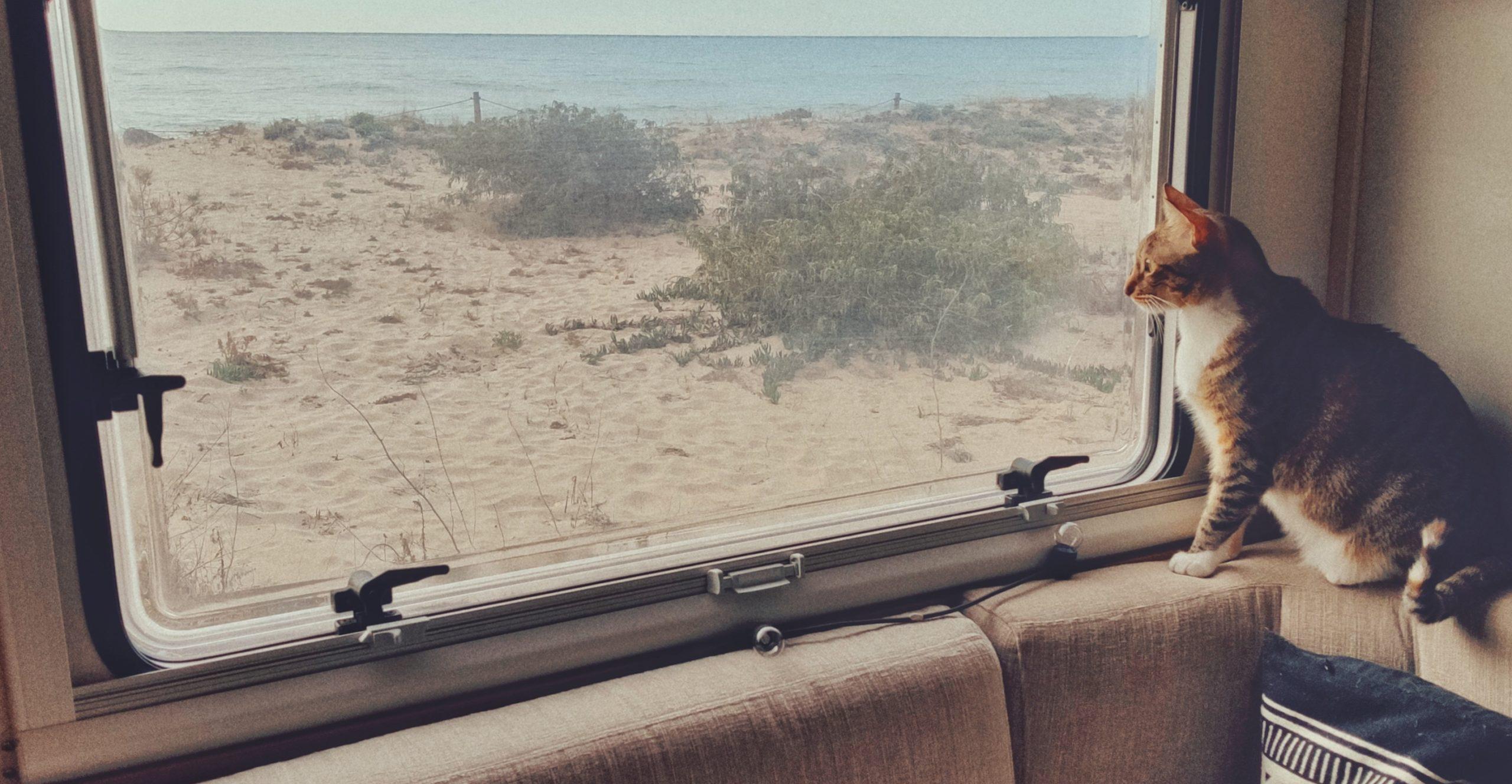 chat-en-camping-car
